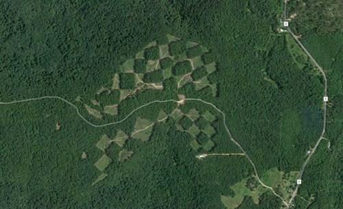 Khu rừng với những ô vuông xen kẽ nhau.
