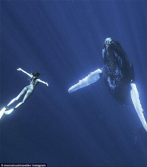 Bơi lặn cùng động vật hoang dã đã trở thành niềm đam mê củaSarah.