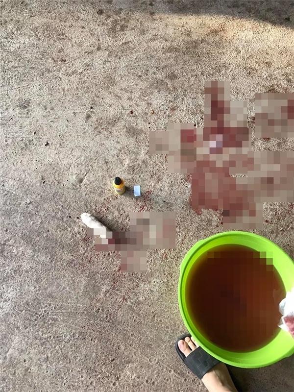 Phần chân bị chặt đứt của chú chó nhỏ.