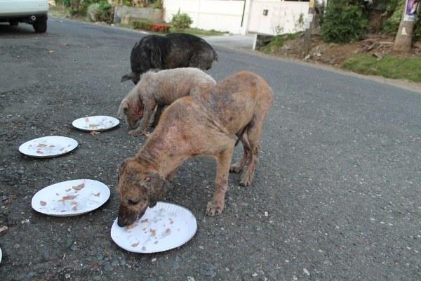 Những chú chó hoang trông rất ốm yếu và có vẻ như không tìm được thứ gì bỏ bụng suốt cả ngày.