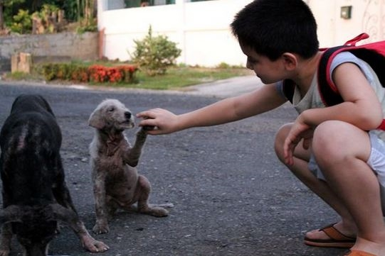Whitey là chú chó đầu tiên đến và cho Ken vuốt ve.
