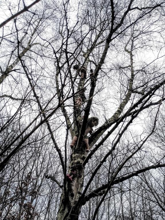Liệu có một đứa trẻ nào đủ cao hay leo trèo đủ giỏi để đặt những con búp bê ma quái này lên cây?