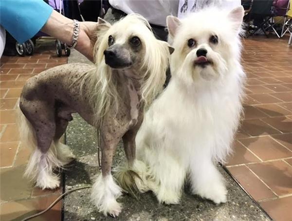 Neo 7 tuổi (trái) và Cooper 1 tuổi (phải).