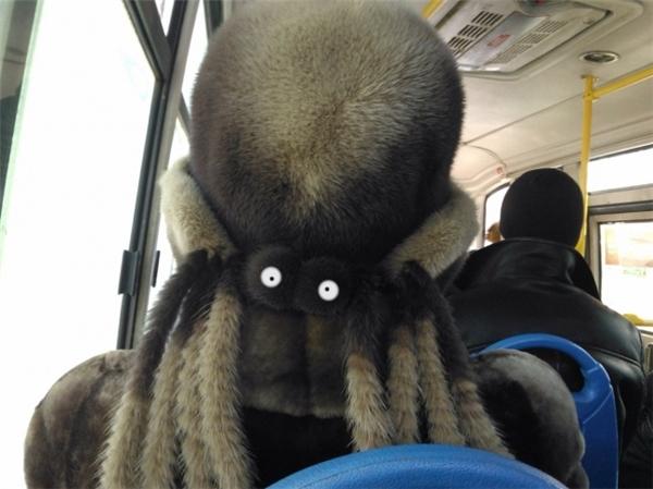 Khi bạn tỉnh dậy trên xe buýt và bất ngờ trông thấy con nhện này đang trừng trừng nhìn lại mình.