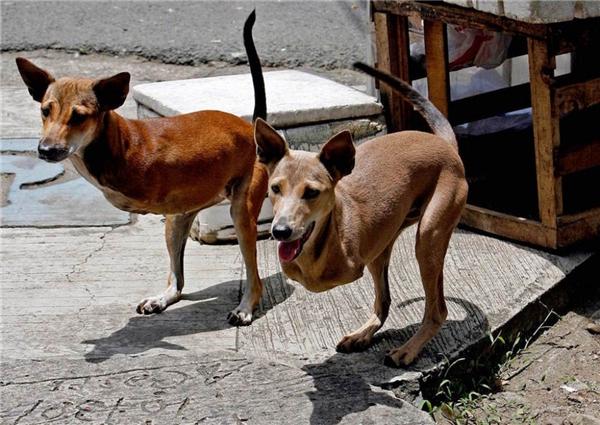 Không một phần mềm chỉnh sửa nào can thiệp vào đôi chân trước của hai chú chó nàycả. Ngay từ khi mới sinh ra, chúng đã không may mắn khi bị mất đi đôi chân trước. Hai chú chó thật đáng thương phải không nào! (Ảnh: Internet)