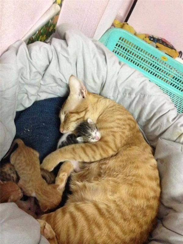 Trông con giúp mèo mẹ.