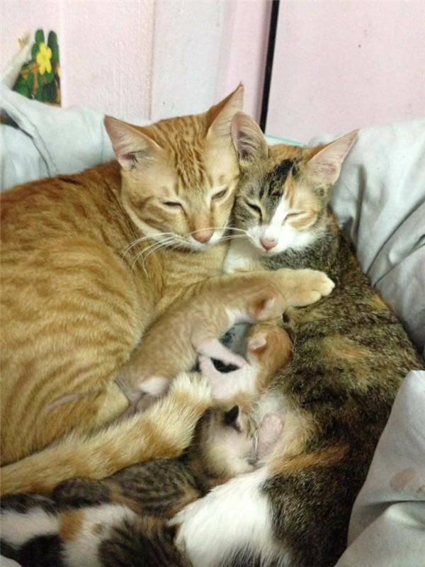 Một gia đình mèo thật hạnh phúc.