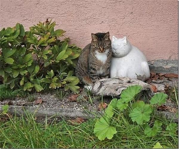 Đến mèo cũng cần có đôi.