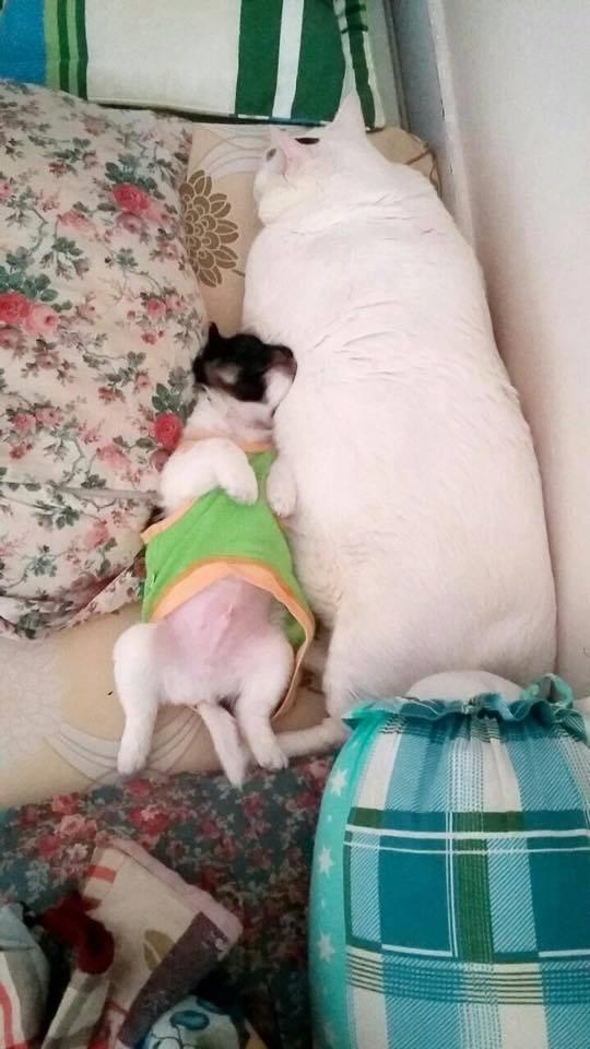 Có ai phân biệt được đâu là chó, đâu là mèo không?