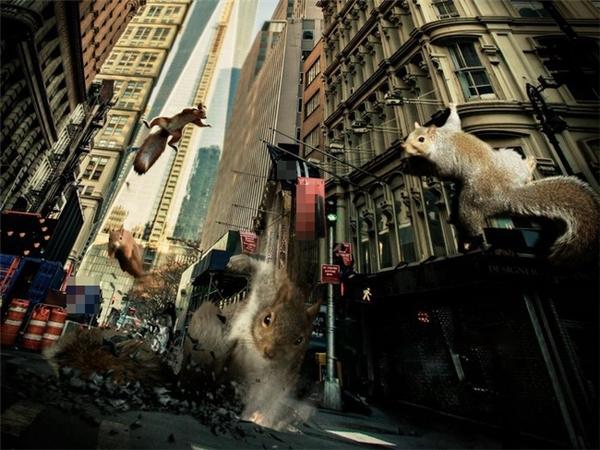 Thay thế loài mèo, loàisóc sắp làm bá chủ thế giới rồi.