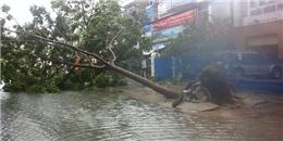 Thêm hình ảnh sự tàn phá của bão số 11