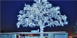Những cây thông Noel điên rồ nhất quả đất