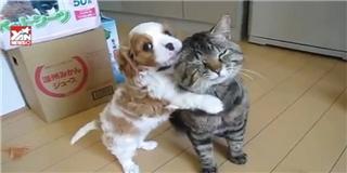 Chú mèo kiên nhẫn nhất thế giới