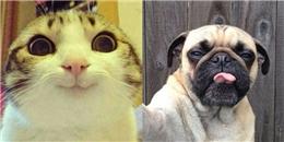 Khi các loài động vật cũng  tự sướng bằng... camera 360