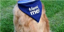 Cảm động câu chuyện chú chó mù lòa giúp đỡ bệnh nhân tự kỷ