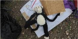 MH17: Những vật dụng còn sót lại của nạn nhân 'chuyến bay tử thần'
