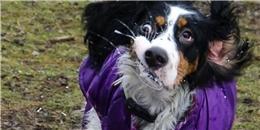 Khoảnh khắc những chú cún cưng bị 'dìm hàng' siêu hài hước
