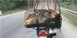 Việt Nam là một trong những điểm đến bị người yêu chó, mèo đòi tẩy chay