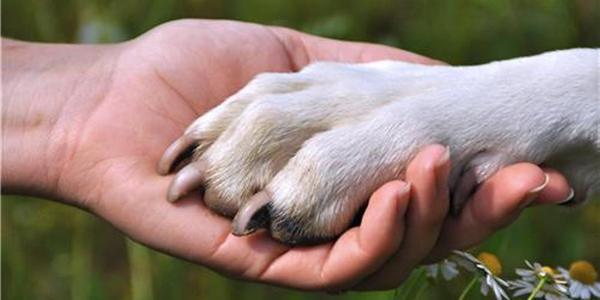 10 lý do đầy thuyết phục khiến bạn phải sở hữu một chú cún