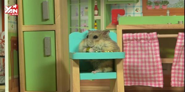 Căn nhà tí hon đáng yêu của chuột