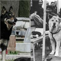 Chuyện cảm động về 8 chú chó trung thành nhất thế giới
