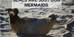 Hài hước so sánh mối liên hệ của các loài