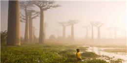 Ấn tượng đại lộ cây baobab - biểu tượng của xứ Madagascar