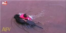 Chú chó giải cứu em bé vào bờ khiến người xem thích thú