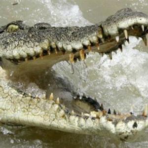 Nhảy xuống hồ có 1000 con cá sấu để tự tử