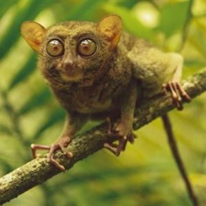 Khám phá 31 điều thú vị đáng ngạc nhiên về các loài động vật
