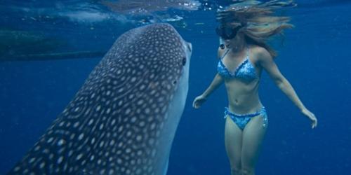 Những loài cá mập thân thiện nhất biển cả