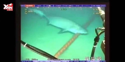 """Clip """"độc"""" ghi lại cảnh cá mập cắn cáp quang dưới đáy biển"""