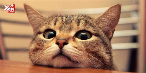 Khi mèo mới là... chủ thật sự trong nhà