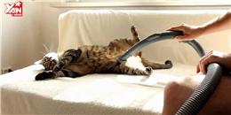 Chú mèo  phê  với máy hút bụi cực hài hước
