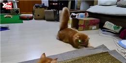 Cười hết cỡ khi gia đình mèo  náo loạn  với tia laser