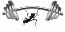 Choáng váng với 21 sự thật phi thường về loài Kiến