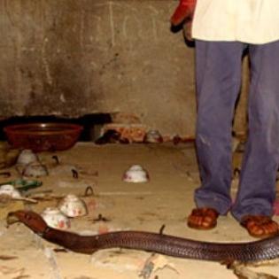 """Hãi hùng kể lại """"cuộc chiến"""" với con rắn cực độc nặng 6,3kg"""