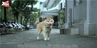 Xúc động với clip chú chó kể chuyện lạc chủ