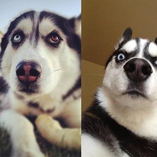 Cười  nghiêng ngả  với những chú chó hài hước nhất thế giới