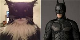 Cười ngất với những sự giống nhau khó tin giữa mèo và người nổi tiếng