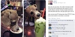 Thiếu nữ bị chỉ trích vì cho cún cưng uống cà phê 'sang chảnh'