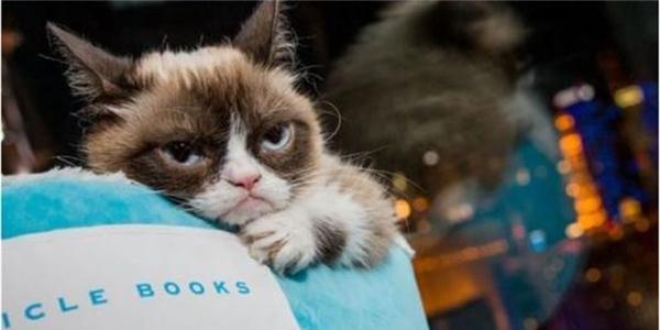 5 chú mèo nổi tiếng giỏi kiếm tiền nhất thế giới