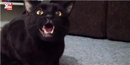 Bất ngờ với chú mèo biết hát