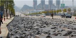 Kinh ngạc 6.800kg cá nằm tràn lan khắp mặt đường
