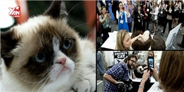 Gặp gỡ chú mèo Grumpy  khó chịu  nổi tiếng nhất thế giới