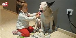 Bác sĩ nhí tương lai tập thực hành trên bệnh nhân cún cưng