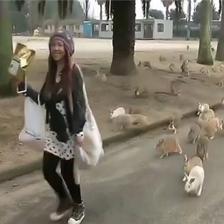 Hàng trăm chú thỏ chạy theo  xin ăn  một cô gái