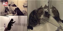 Những biểu cảm khó đỡ của mèo khi tự soi gương