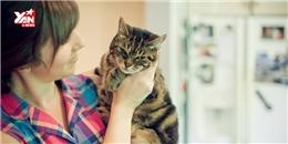 7 bài học cuộc sống mà bạn phải học từ chú mèo của mình
