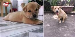 Cư dân mạng xót xa với clip tưởng nhớ chú chó Bốp bị đánh bả chết